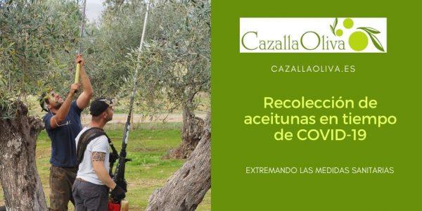 ¿Cómo será la recolección de la aceituna en tiempos de COVID-19?
