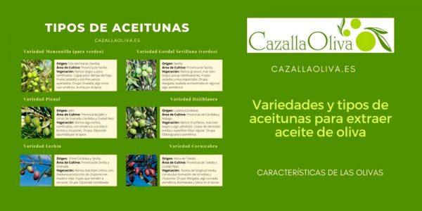 Variedades y características de los diferentes tipos de aceitunas
